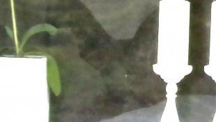 Window, Voyeur